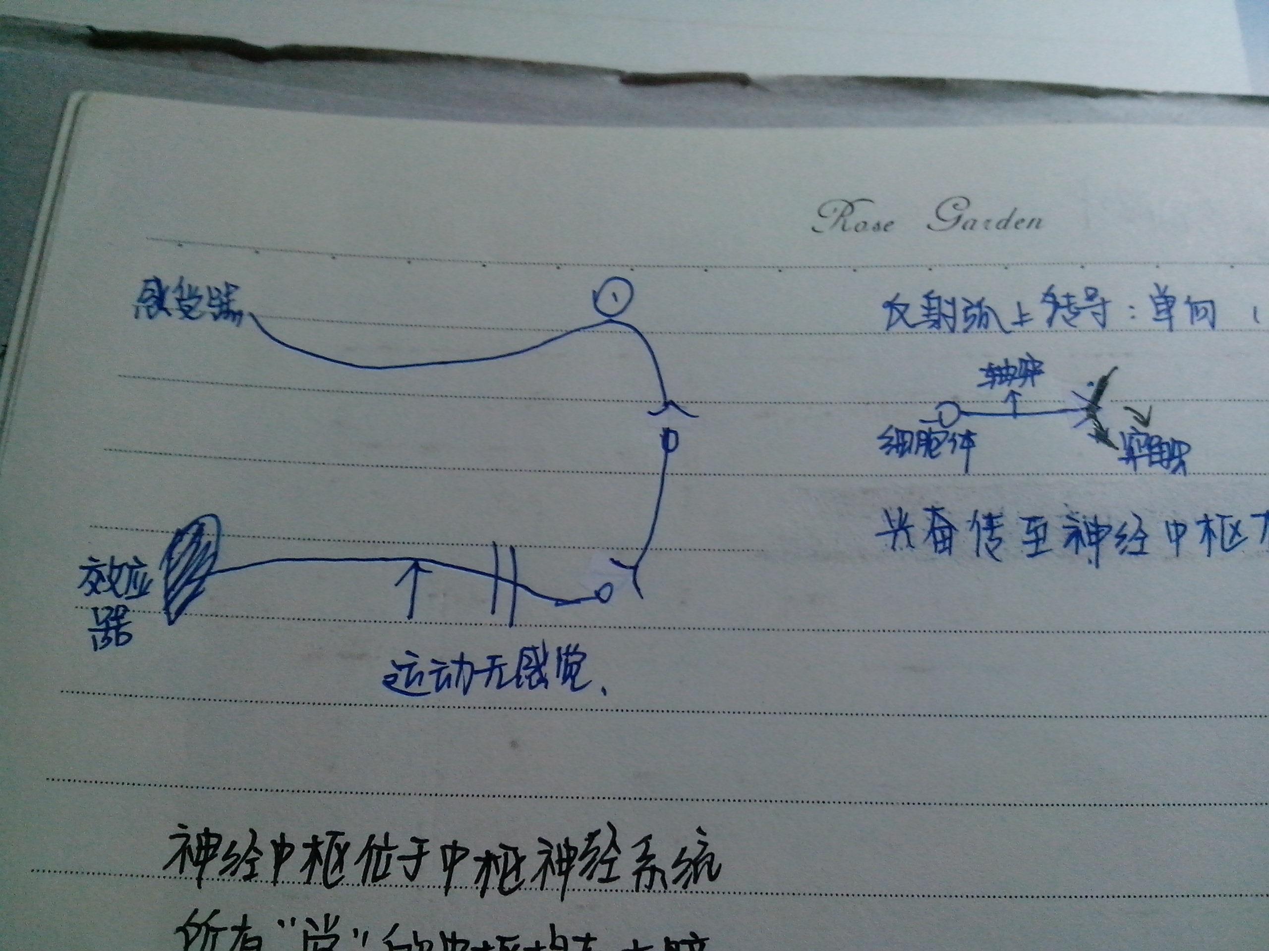 突触简图怎么画?各个图标都代表什么?