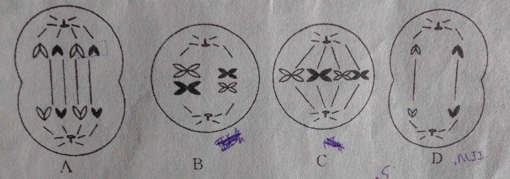 儿童思考问题简笔画