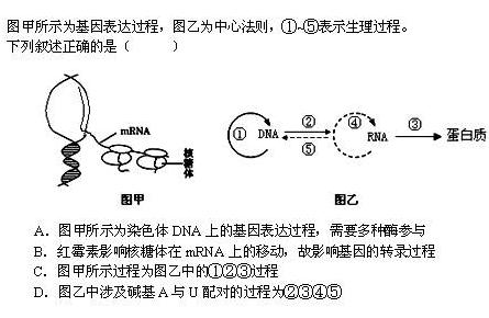 翻译与转录_遗传与进化_高中_高三_简单学习规定请假生物图片