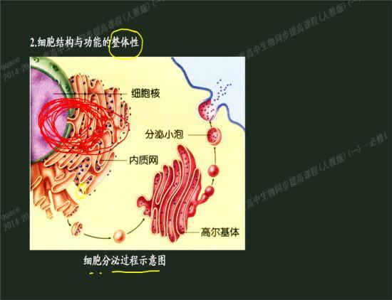 内质网的一端通过核孔伸入到细胞核里面吗