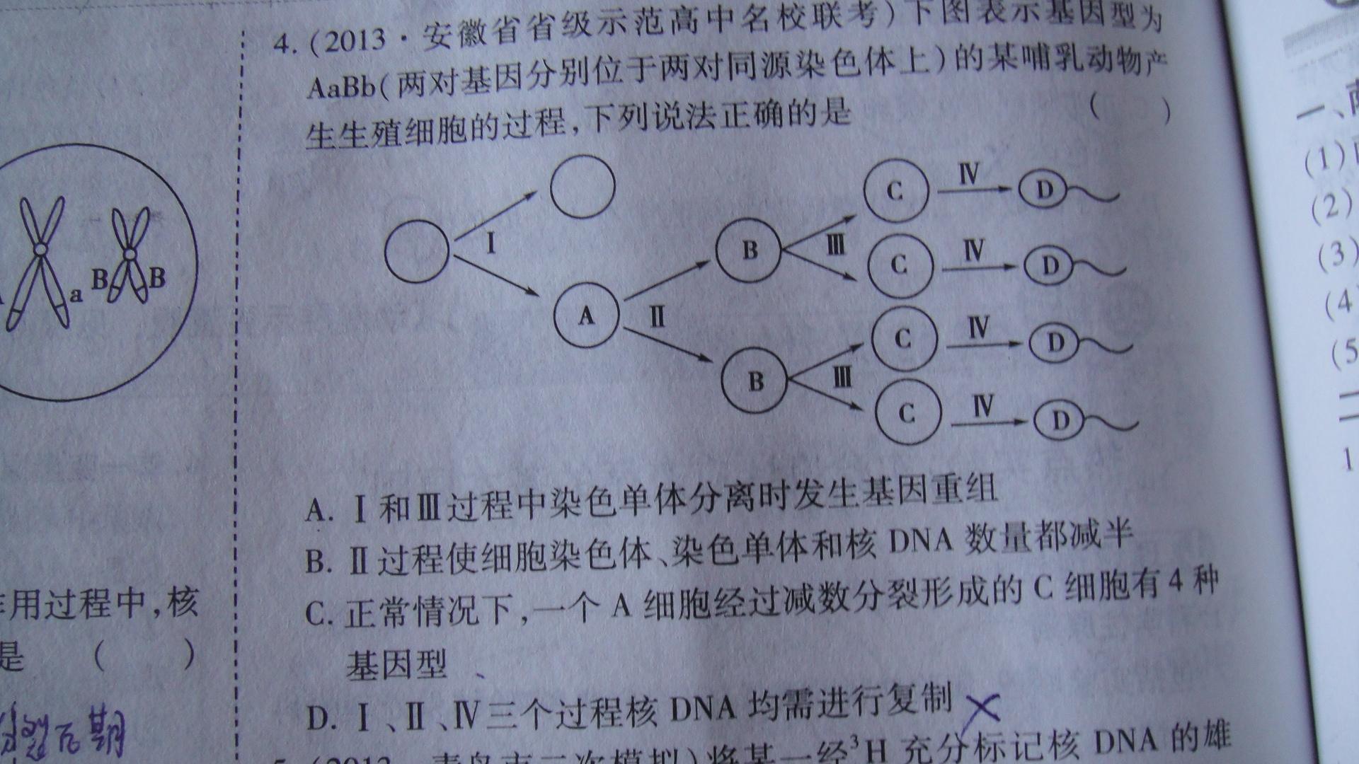 减数分裂和受精作用