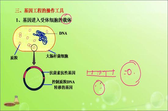 大肠杆菌不是原核生物吗?怎么会有dna?