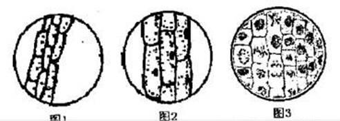 图1是植物根尖分生区细胞在低倍镜下所观察到的细胞