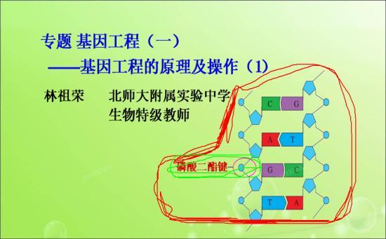 为什么叫磷酸二酯键呢?(图中绿色的部分)