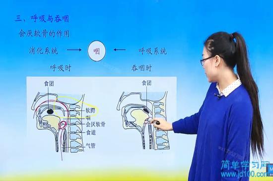 老师喉软骨是什么?在哪里?画黄圈的是什么